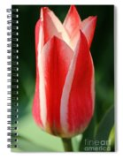 Cherry Pin Stripes Spiral Notebook