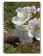 Cherry Tree Blossom White Flower Spiral Notebook