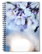 Cherry Tree Blossoms In Morning Sunlight Spiral Notebook