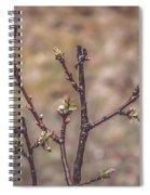 Cherry Tree Spiral Notebook