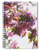Cherry Tree Flowers Spiral Notebook