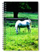 Chestnut Hill Horse Spiral Notebook