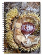 Chestnut Spiral Notebook