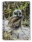 Chick Burrowing Owl  Spiral Notebook