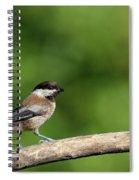 Chickadee . 40d8031 Spiral Notebook