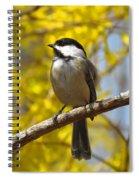 Chickadee In Spring Spiral Notebook