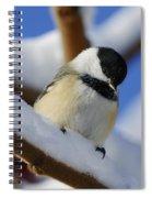 Chickadee... Spiral Notebook