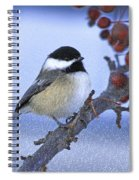Chickadee With Craquelure Spiral Notebook