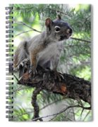 Chickaree On The Tree Spiral Notebook