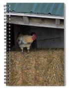 Chicken In Barn Spiral Notebook