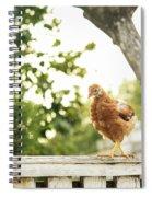 Chicken On Fence Spiral Notebook
