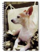 Chihuahua Chiqui Portrait 3 Spiral Notebook