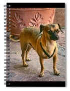 Chihuahua - Dogs Spiral Notebook
