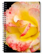 Chihuly Spiral Notebook