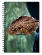 Child Watching Spotted Ray Fish Spiral Notebook