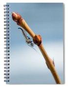 Chillin' On A Stem Spiral Notebook