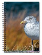 Chilling Seagull Spiral Notebook
