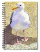 Chilly Spiral Notebook