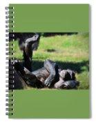 Chimp Sunbathing Spiral Notebook