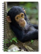 Chimpanzee Pan Troglodytes Baby Leaning Spiral Notebook