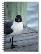 Chincoteague Island - Great Black-headed Gull Spiral Notebook