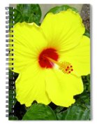 Chinese Hibiscus Spiral Notebook