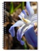 Chionodoxa I I Spiral Notebook