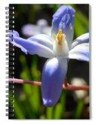 Chionodoxa Spiral Notebook