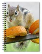 Chipmunk And Oranges 2 Spiral Notebook