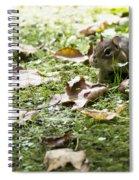 Chipmunk Getting Ready For Winter Spiral Notebook