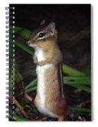 Chipmunk On Alert Spiral Notebook