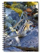 Chipmunk On The Rocks Spiral Notebook