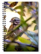 Chipping Sparrow In The Brush Spiral Notebook