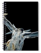 Chironomid Larva Chironomus Sp., Lm Spiral Notebook