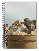 Chirping Swallows Spiral Notebook