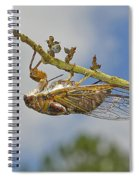 Chirrup Chirrup Spiral Notebook
