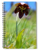 Chocolate Lily Two Spiral Notebook