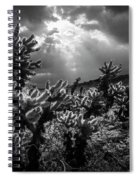 Cholla Cactus Garden Bathed In Sunlight In Black And White Spiral Notebook
