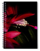 Christmas Beauty Spiral Notebook