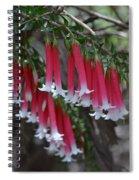 Christmas Bells 1 - Australian Native Fuchsia Spiral Notebook