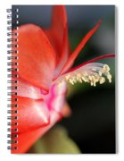 Christmas Cactus 2016 Spiral Notebook