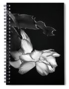 Christmas Cactus 8938bw Spiral Notebook