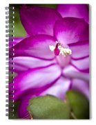 Christmas Cactus Spiral Notebook