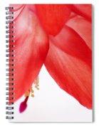 Christmas Cactus Macro Spiral Notebook