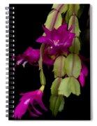 Christmas Cactus Purple Flower Blooms Spiral Notebook