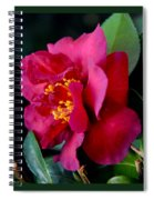 Christmas Camellia Spiral Notebook