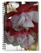 Red White And Green Spiral Notebook