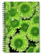 Chrysanthemum Green Button Pompon Kermit Spiral Notebook