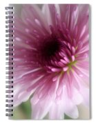 Chrysanthemum #001 Spiral Notebook