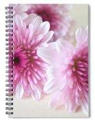 Chrysanthemums #009 Spiral Notebook